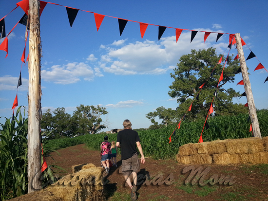 Barton-Hill-Farms-Bastrop-Texas-Fall-Festival-Corn-Maze-2013-10