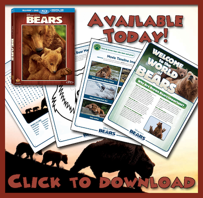 Disneynatures-Bears-downloadable-Bears-activities