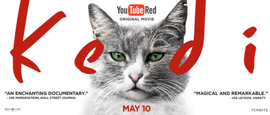 """Kedi,"" the purrfect film to curl up and watch on YouTube Red May 10!"